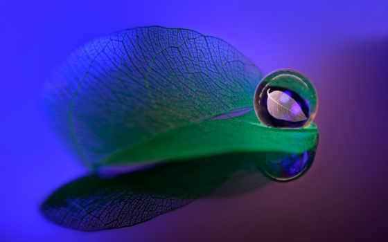 water, desktop, лист, leaf, зелёный, free, drop, прожилки,