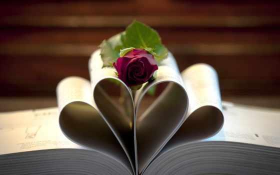 роза, книги, цветы
