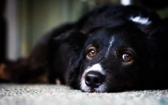 ветеринарный, челябинск, ветеринарная, ночь, recorders, video, собак, клиника, айболит, dinner,