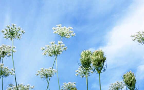 blue, небо, цветы