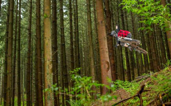 велосипед, спорт, леса