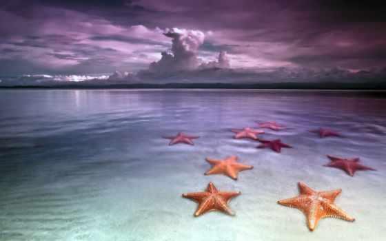 звезды, морские, пляж