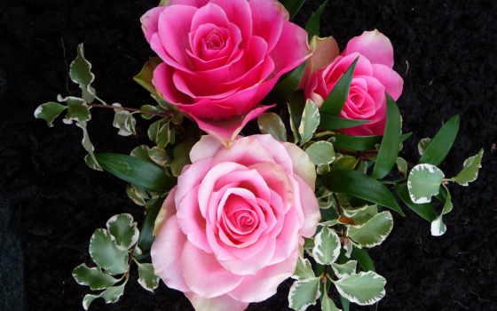 rosas, fondo, fondos, pantalla, escritorio, flores, imágenes, negro, amor, siempre, vectores,
