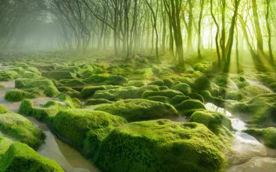 лес, зелёный, фоны, лесу, мох, яndex, леса, коллекциях, бор, камни, заставки,