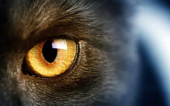 глаз, грн, glaza, фотообои, гель, цена, кошачьих, подборка, доставка, feline,