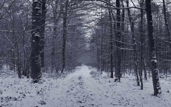 les, зимний, dorogoi, grey, fore, gruntovoi, zima, дерево, бюст, airenon, shirokoformatnyi
