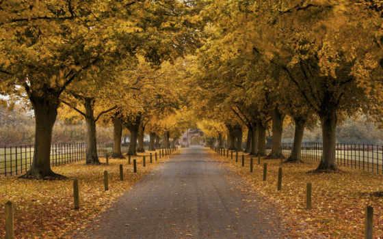 осень, деревья Фон № 33576 разрешение 1920x1200