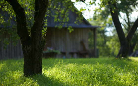 трава, garden, trees, природа, саду,
