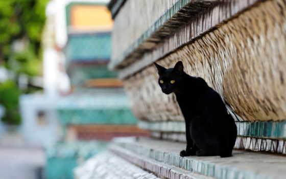 кот, грустный, красивый, black, город, random, cats,