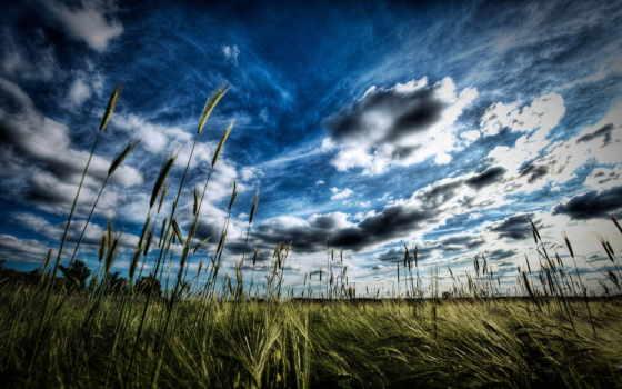 природа, небо, широкоформатные, поле, красивое, день, макро,