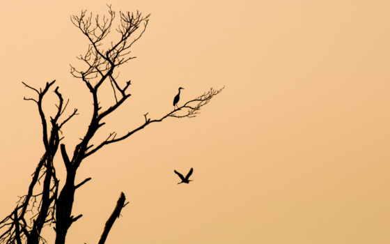 дерево, птицы,