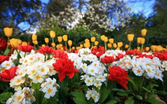 çiçekler, музыка, renkli, güzel, indir, красочные, duvar, colorful,