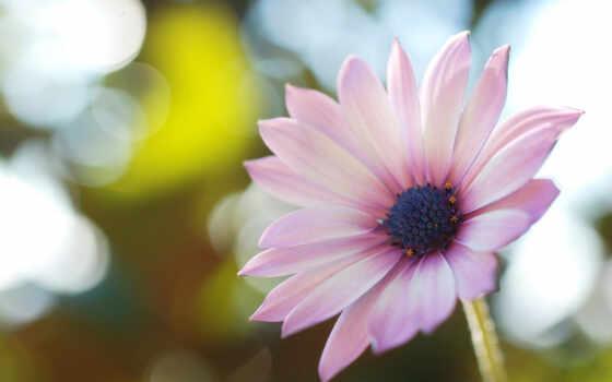 mobile, daisy, качество, цветы, фото, resolution, ночь