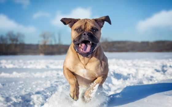 собака, зима