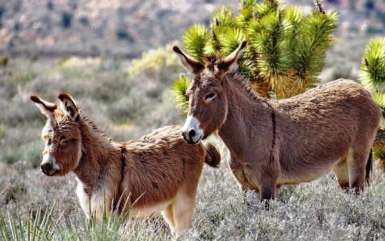 donkey, zhivotnye, картинка