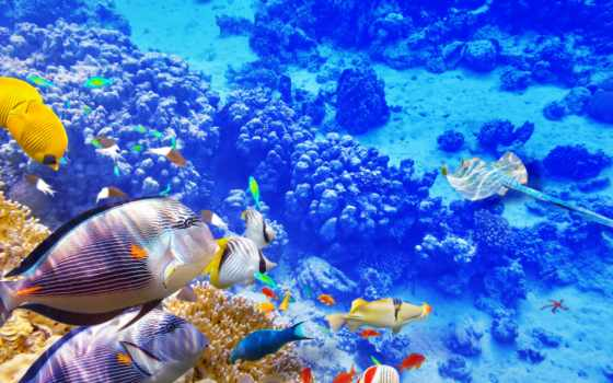 underwater, world, coral, риф, fishes, купить, рыбки, zhivotnye,