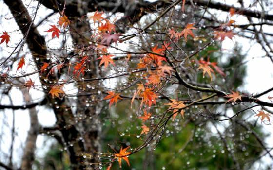 осень, пейзажи -, часть, дождь,