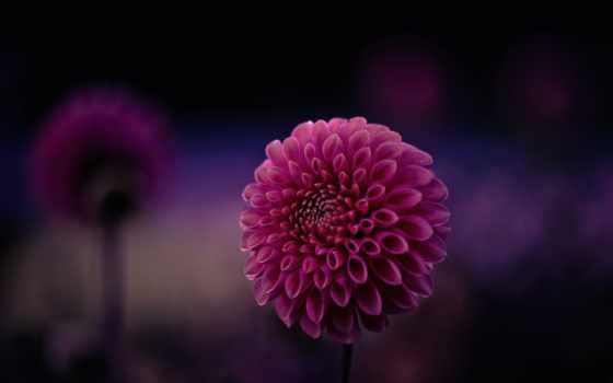 плоскости, макро, лепестки, цветы, makro, zeiss, trick, purple, мм, малиновый, flickr,