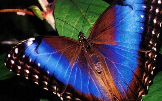красивые, бабочка, их, she, россии, красную, красной, книгу, бабочки, бабочек,