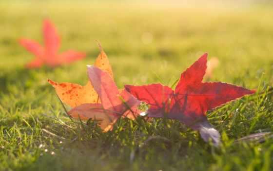 fall, ornare