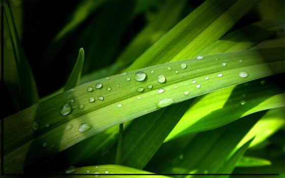 природа, трава, water