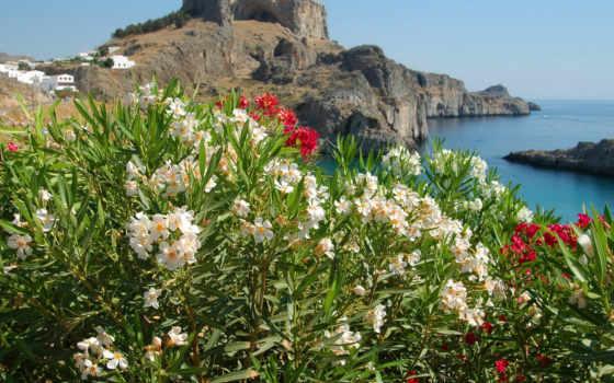 цветы, моря, море