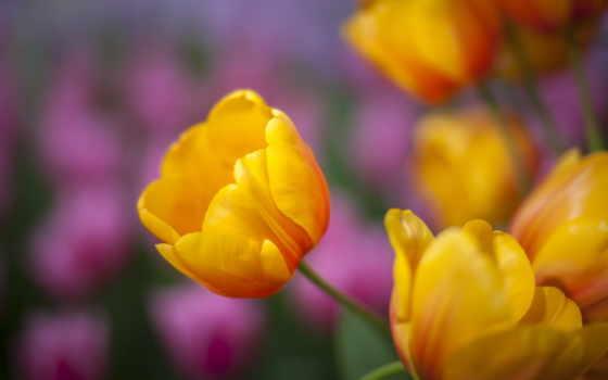 cvety, priroda, admin