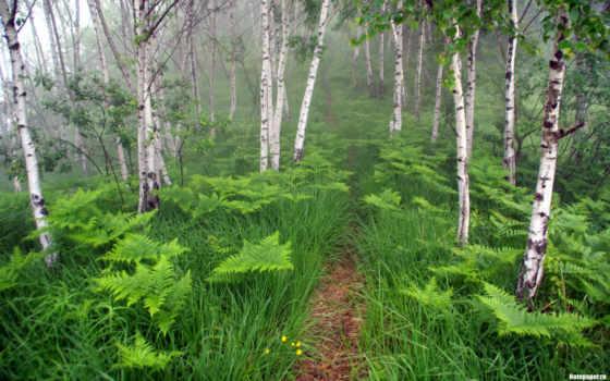 лес, картинка, trail, trees, папоротники, кустики,