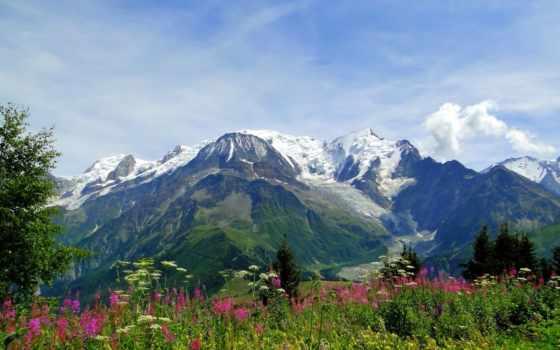альпы, горы, mont, цветы, луг, природа, blanc,