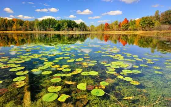 природа, озеро, осень, лес, природой, красивые,