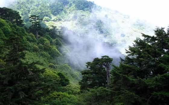 лес, лесные, new, pictures, orleans, desktop,