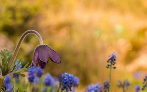 , ваниль, цветок, поляна