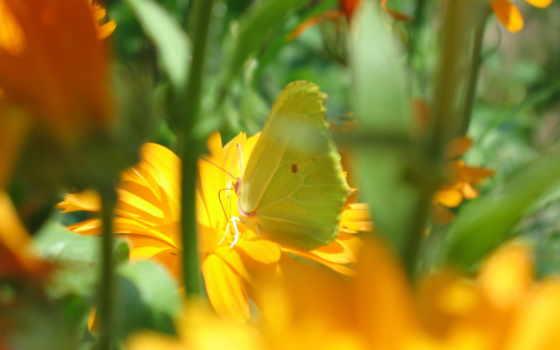 ipad, бабочка, цветы, flora, природа, фотография, лучик, телефон, солнечный, мини,