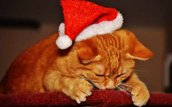 кот, new, ipad, новый год, шапка, елка, christmas