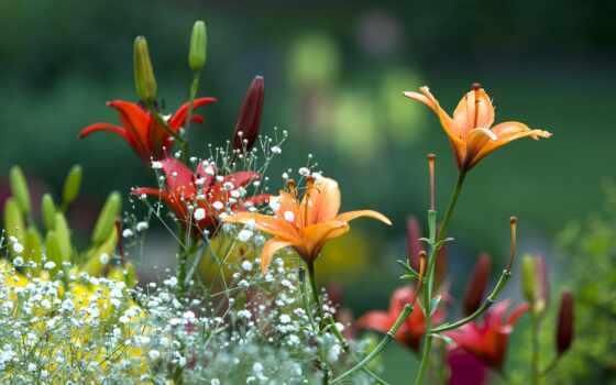 цветы, summer, красивый, alive, яркий, весна
