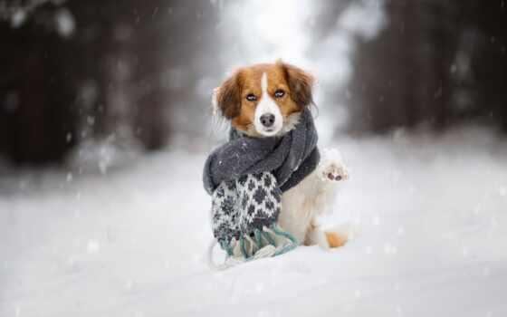 собака, щенок, meme, снег, soccer, winter