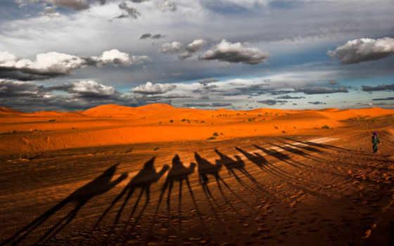 пустыня, караван