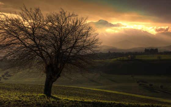 дерево, пейзажи -, красивые