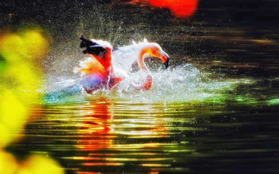 фламинго, water, птица, розовый, брызги, рябь, воды,