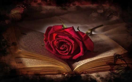 роза, red, книга