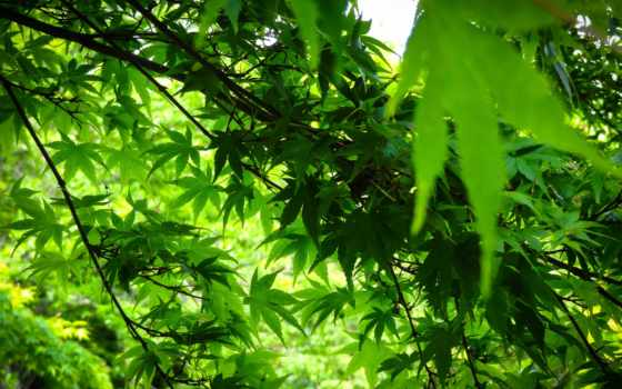 листва, зеленые, nat, ветки, trees, фотообои,