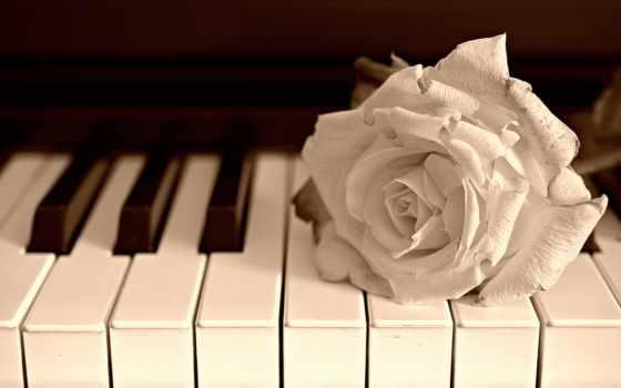 piano, роза, клавишах, лежит, музыка, цветы, разрешениях, разных,