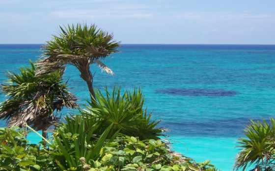 природа, летом, природой, summer, телефон, тропиках, хорошо, тропической, заставки, sharp,