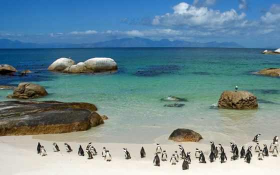 пляж, но, пингвины, town, boulders, cape, юар,