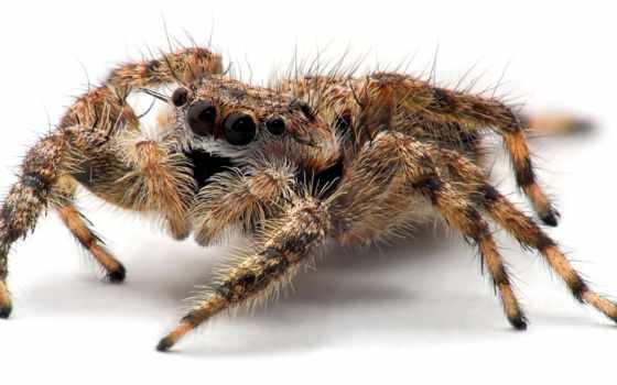 паук, заставки, ужасный, пауков, свет, паука, пауки, black, очень, лапы,