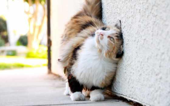 кот, нить, cats
