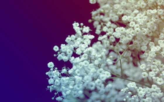красивые, cvety, бесплатные, широкоформатные, экран, весь, белые, blue, color, букет,