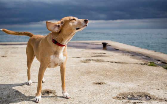 собака, друг Фон № 14882 разрешение 1920x1200