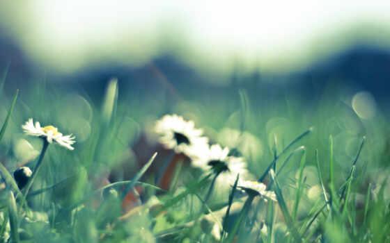 поляна, цветы, ромашки Фон № 56377 разрешение 2560x1600