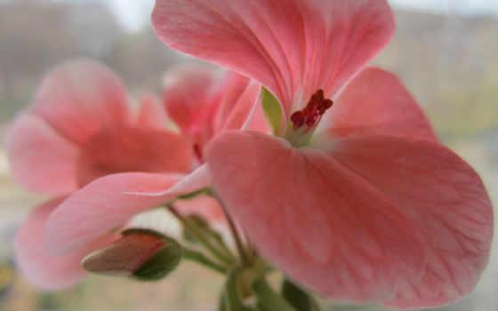 дневник, розовый, макро